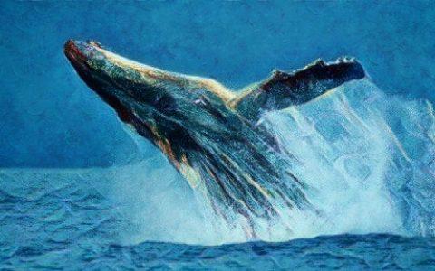 过去两月,比特币巨鲸大户悄悄抄底