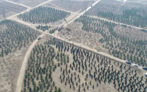 """雄安新区采用区块链技术建设""""千年秀林"""",创造人类造林历史"""