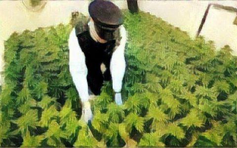 雄岸科技与百成签订工业大麻种植合作伙伴协议
