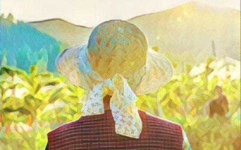 中国:农业金融领域实施区块链的新指南