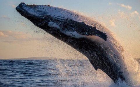"0.28BTC就能当比特币""巨鲸""?"