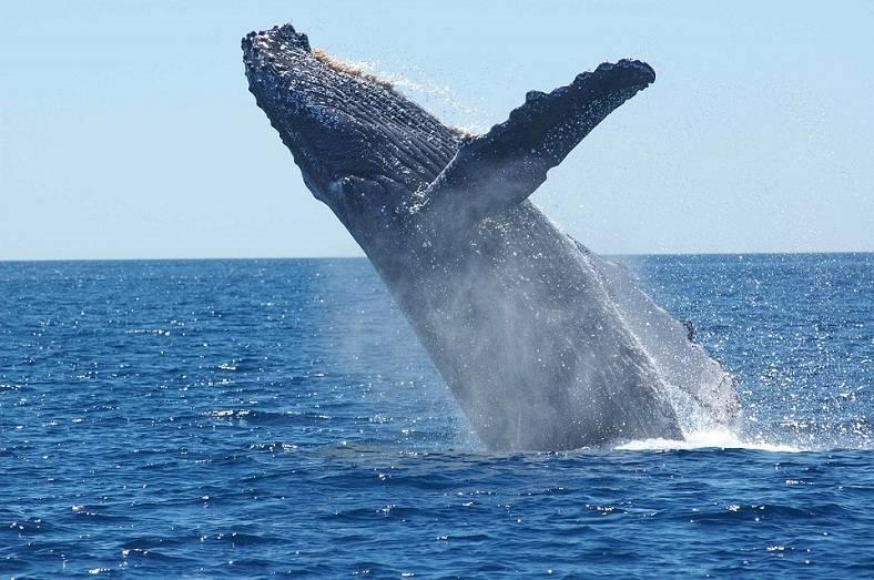 研究:一名巨鲸疑为2017年比特币牛市的幕后推手