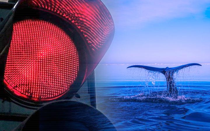 "Whale Alert创始人:比特币鲸鱼濒临""灭绝"""