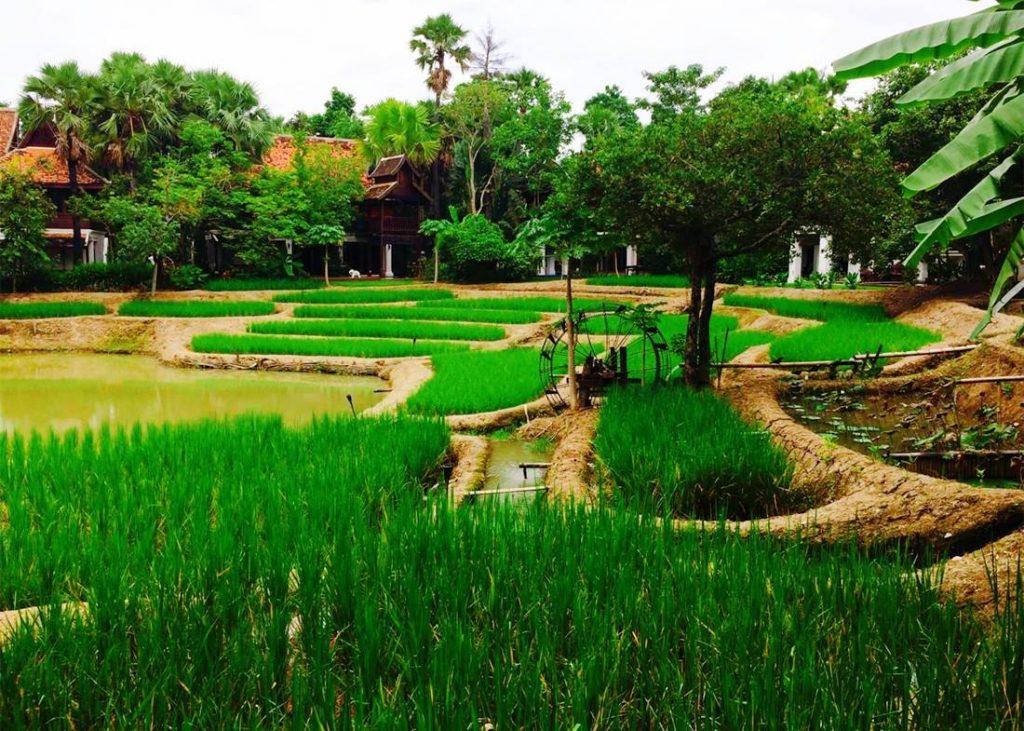 泰国将推出农业区块链,跟踪大米质量