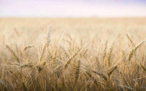 区块链如何为农作物生产与售卖带来新的机遇?